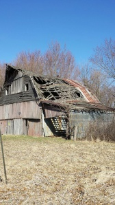 Barns in this state of disrepair at once draw me in and creep me out. Hawk keeps watch.